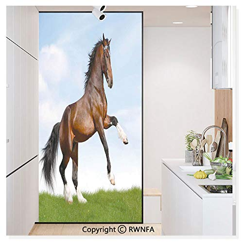 Window Glass Sticker Door Mural Bay Horse Pacing on The Grass Energetic Noble Character of The Nature Honor Concept Static Cling Privacy No Glue Film Home Decorative 11.8x59.8inch,Blue Green Brown