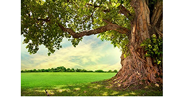 Nature 10x20 FT Photography Backdrop Rural Scenery Wilderness Forest Various Kinds of Trees Botanical Garden Image Background for Photography Kids Adult Photo Booth Video Shoot Vinyl Studio Props