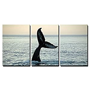 "wall26 - 3 Piece Canvas Wall Art - Fin of a Humpback Whale - Modern Home Decor Stretched and Framed Ready to Hang - 16""x24""x3 Panels"