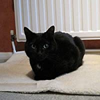 Self Heating Pet Blanket Pad Ideal for Cat/Dog Bed 64x49 cm XLook