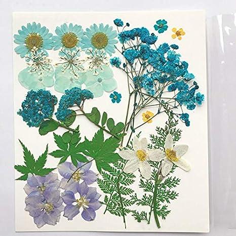 Floral-Handwerk blau LACKINGONE Mehrfach gepresste nat/ürliche getrocknete Blumen-Verzierung f/ür DIY-Dekoration