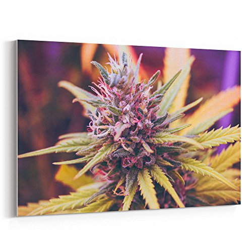 Westlake Art - Cannabis Marijuana - Cannabis wall art