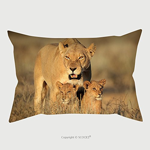 Custom Microfiber Pillowcase Protector Lioness With Young Lion Cubs (Panthera Leo) In Early Morning Light, Kalahari Desert, South Africa_14655113 Pillow Case Covers Decorative (Wicker Africa Furniture Outdoor South Patio)