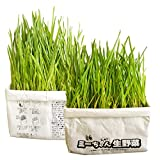 Mizzang - Organic Wheat Grass kit for Cats - Nontoxic Fresh nip Plants for cat - Non Soil eco Friendly Paper Planting Oat Seeds to eat