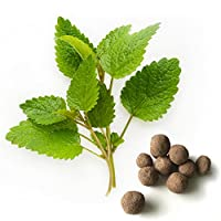 20 Lemon Balm Seed Balls (Melissa officinalis)- Herb & Vegetable Seed Bombs to make gardening fun and simple!