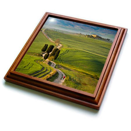 - 3dRose Danita Delimont - Italy - Cypress trees and winding road to villa near Pienza, Tuscany, Italy - 8x8 Trivet with 6x6 ceramic tile (trv_277543_1)