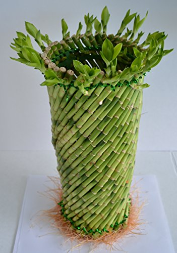 Jumbo Lucky Bamboo twisted design 8'' tall and 3.5'' in width from JM Bamboo by JM BAMBOO