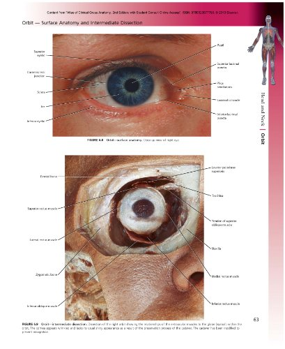 Atlas of Clinical Gross Anatomy: With STUDENT CONSULT Online Access - http://medicalbooks.filipinodoctors.org