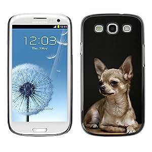 Vortex Accessory Carcasa Protectora Para SAMSUNG GALAXY S3 III i9300 - Chihuahua Tiny Pet Dog Canine Purse -