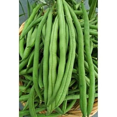 Green Bean Seed: Kentucky Wonder Pole Beans Fresh Seed : Garden & Outdoor