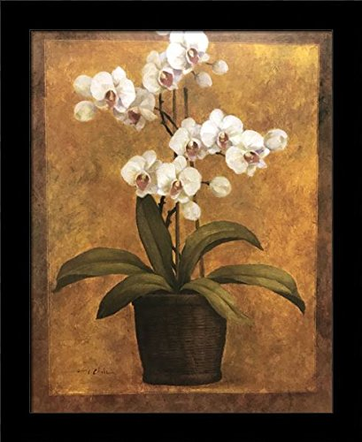 Black 1 inch Framed White Orchids, (Flowers / 37-8X10-T), used for sale  Delivered anywhere in USA