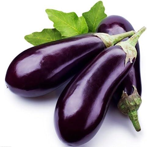 Organic  100 Pcs Black Eggplant Seeds Green Vegetable For Garden Planting