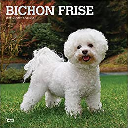 Bichon Frise 2020 12 X 12 Inch Monthly Square Wall Calendar