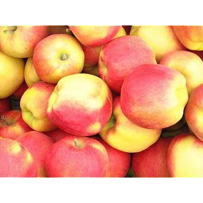 Apple Seeds- AMBROSIA - Bi-Colored Variety - Juicy with Sweet Flavor - 10 Seeds : Garden & Outdoor