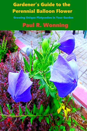 Gardener S Guide To The Perennial Balloon Flower Great Plant For