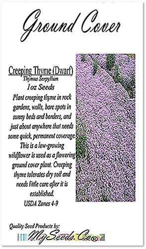 Dwarf Creeping Thyme Herb (220,000+) Seeds - Thymus Serpyllum - Excellent Ground Cover - Non-GMO Seeds by MySeeds.Co (Dwarf Creeping 1oz - 1,000 sq ft) by MySeeds.Co - Flower Seeds by the LB