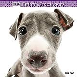 THE DOG Wall Calendar 2018 Italian Greyhound