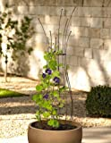 Cheap Gardener's Supply Company Decorative Metal Pot Trellis