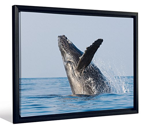 Whale Mural (JP London FLCNV2009 Feature Wall Art 2 inch Thick Heavyweight Framed Stretched Canvas Wall Art Mural Humpback Whale Splash At 50 inch Wide By 38 inch High)