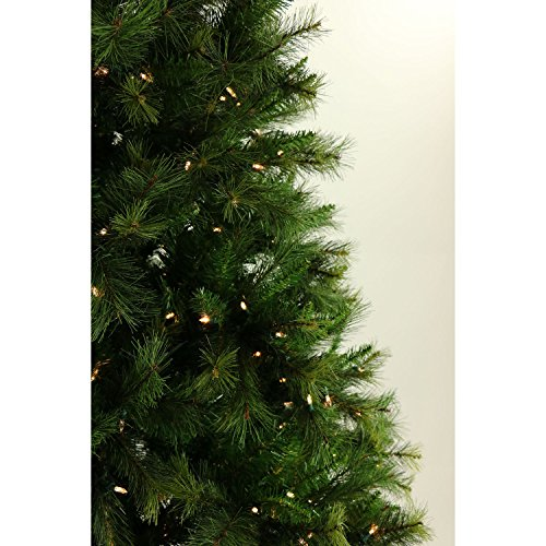 Bq Christmas Trees