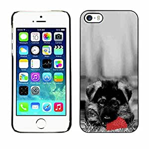 Shell-Star ( Cute Dog German Sheppard Puppy ) Snap On Hard Protective Case For Apple iPhone 5 / 5S