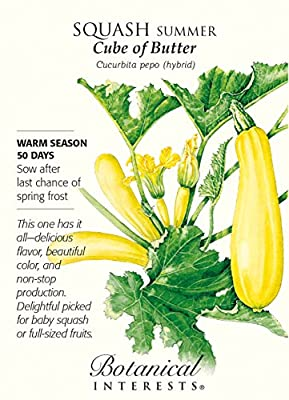 Cube of Butter Summer Squash - 10 Seeds - Botanical Interests