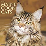 Just Maine Coon Cats 2020 Wall Calendar