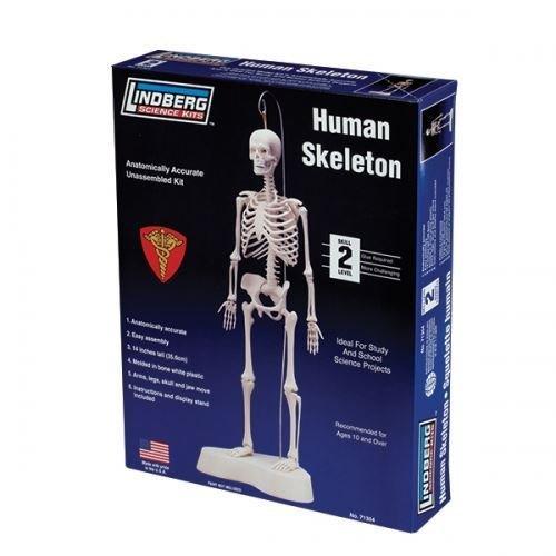 educational skeleton model - 6