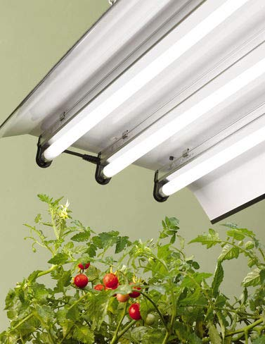 High Intensity Fluorescent Lights - High Intensity Light Fixture