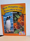 How Penguins and Butterflies Grow, Lisa Shulman and Capstone Press Staff, 0736839321
