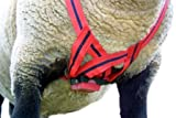 MATINGMARK Deluxe Ram Marking Harness for Monitoring Breeding Sheep & Goats by Rurtec, Crayon Block Marker System, Made in New Zealand - Standard Size (Crayon Sold Separately)