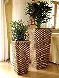 2er Set Wasserhyazinthe Blumenkübel Blumentöpfe Übertöpfe Penang 87/62cm hoch...