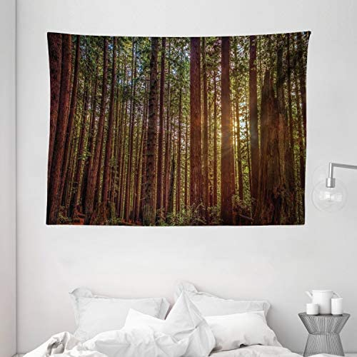 Ambesonne Forest Tapestry, Redwood Forest in California USA Nature Outdoors Landscape Woods Park, Wide Wall Hanging for Bedroom Living Room Dorm, 80 X 60 , Redwood Yellow