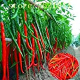 ChinaMarket 200 pcs Seeds Long hot Pepper Seeds, red hot Chilli Peppers, Fruit and Vegetable Seeds