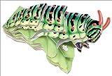 Caterpillar, Abrams, 0810956683