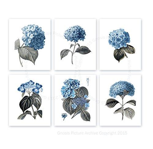 French Hydrangea (Blue Flowers Botanical Prints Hydrangea Art Prints Set of 6 Unframed Blue Flowers Wall Art Farmhouse Decor Blue_Hydrangea6A)
