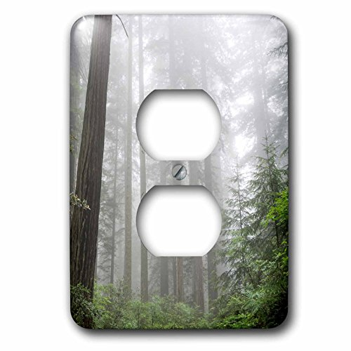 Danita Delimont - Forest - Lady Bird Johnson Grove, Prairie Creek Redwoods State Park, CA - Light Switch Covers - 2 plug outlet cover - Outlet Creek Johnson