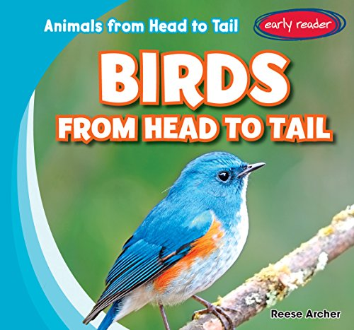 Birds from Head to Tail (Animals from Head to Tail) by Gareth Stevens Pub