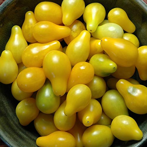 0.08 g Seeds of Solanum lycopersicum, Yellow Pear Cherry Tomato