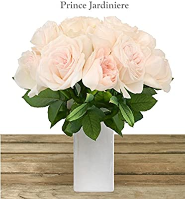 Amazon Com Prince Jardiniere Garden Rose 40 50cm Pack 48 Stems