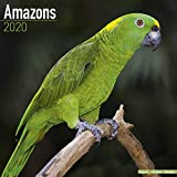 Amazon Parrot Calendar - Parrot Calendar - Bird Calendars - Calendars 2019 - 2020 Wall Calendars - Monthly Wall Calendar by Avonside