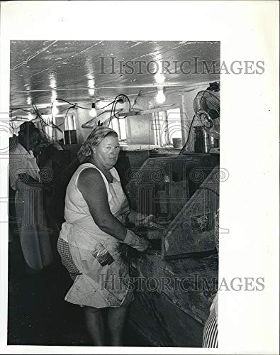 Vintage Photos Press Photo Oyster Shuckers in Apalachicola (Best Oysters In Apalachicola)