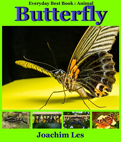 Books For Kid :Butterfly :Animal Book for Kid: 50 Photos+: (Kids Books- Bedtime Stories For Kids- Children's Books- Kids Fantasy Books,Photo book, Bed (Everyday Best Book: Animal Book for Kid 2)