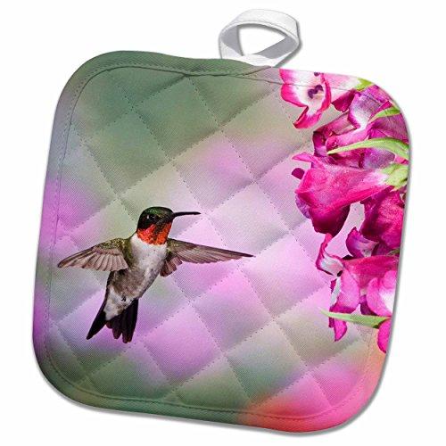 3D Rose Illinois - USA - Ruby-Throated Hummingbird. Pot Holder 8 x 8 (Hummingbird Holder Pot)