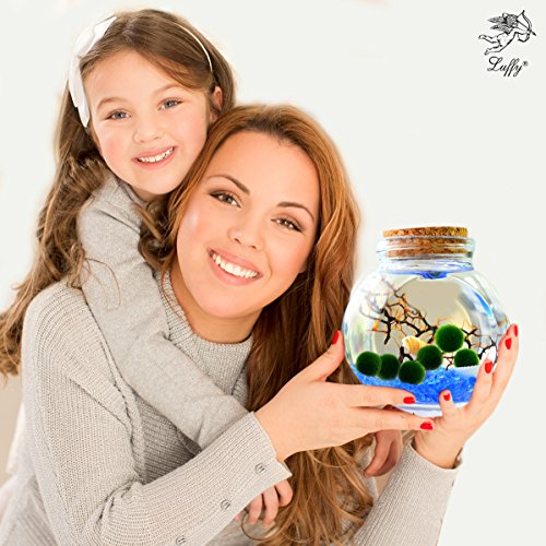 Luffy 6 Nano Marimo Moss Balls for Children - Vibrant Green Living Aquatic Plant - Great for Educational Crafts and Do It Yourself Projects - Perfect Art & Craft gift (Nano Freshwater Aquarium)