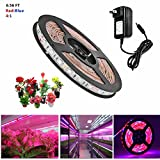 Topled Light LED Plant Grow Strip Light with Power Adapter,Full Spectrum SMD 5050 Red Blue 4:1 Rope Light for Aquarium Greenhouse Hydroponic Pant Garden Flowers Veg Grow Light (2M)
