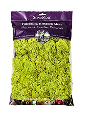 SuperMoss Reindeer Moss Preserved