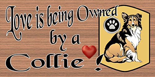Love is Being Owned by a Collie