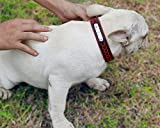 Vcalabashor Custom Leather Dog Collar/Braided Genuine Leather Name Plated Dog Collars for Small Medium Large/Personalized Engraved On Collar Pet ID Tags/Pink & Black/XS S M L