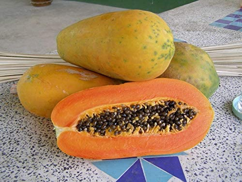 Papaya//Lechosa 25 seeds Sweet and delicious!